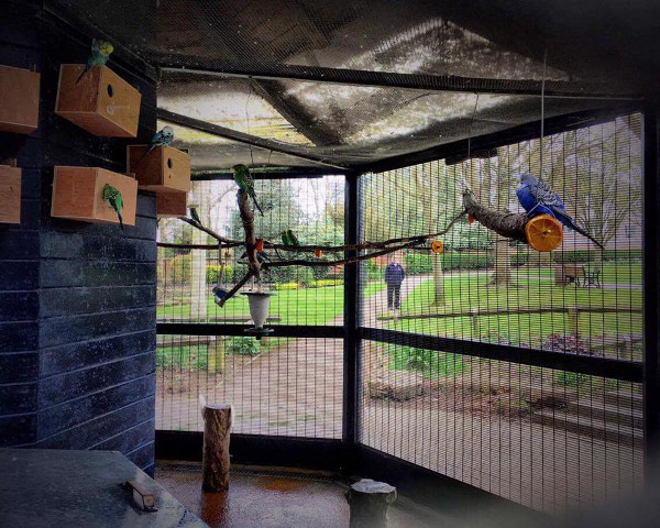Birds in the aviary got to be fed
