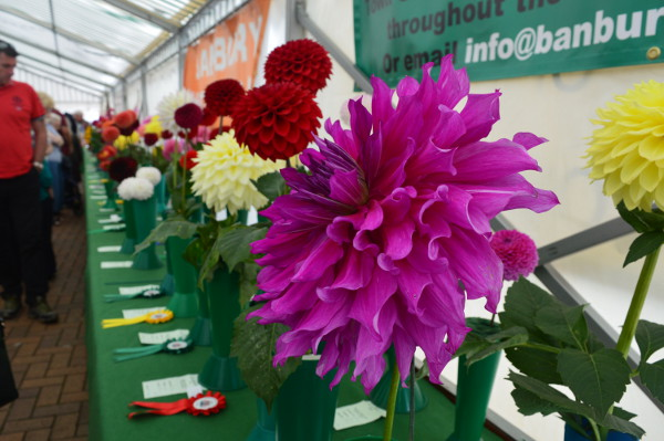 The Flower and Produce Show was again sponsored by former mayor, councillor and businesswoman Rosemarie Higham Stevens