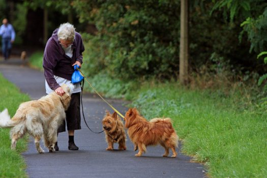 Council's advice to keep dogs healthy and safe this summer.