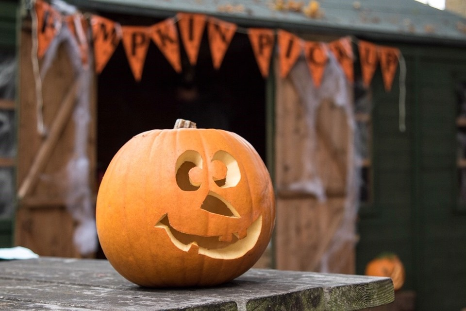 Explore the parkland this October half term to find out what 'creepy' crawlies are living at Charlecote. Complete the trail and earn your pumpkin prize to take home and carve.