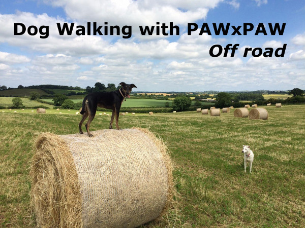 Dog Walking with PAWxPAW
