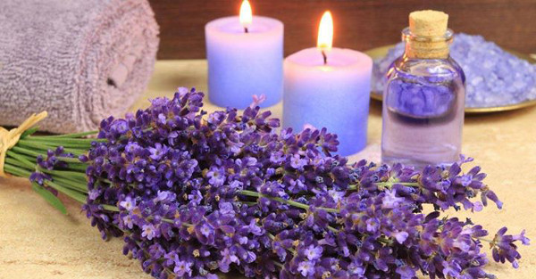 lavender-nights