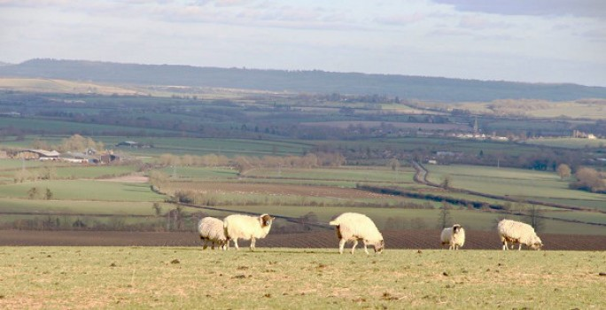 The beautiful Warwickshire countryside by Maureen Tyrrell